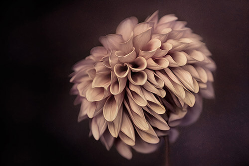 Fine Art Photography by Diane Varner