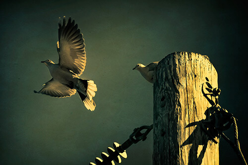 Fine Art Photography by Diane Varner