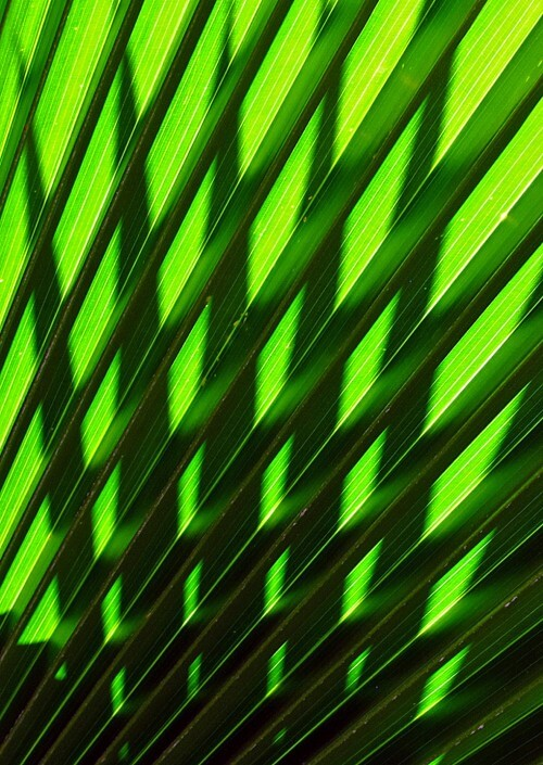 Palm-Leaf-Shadows-copy
