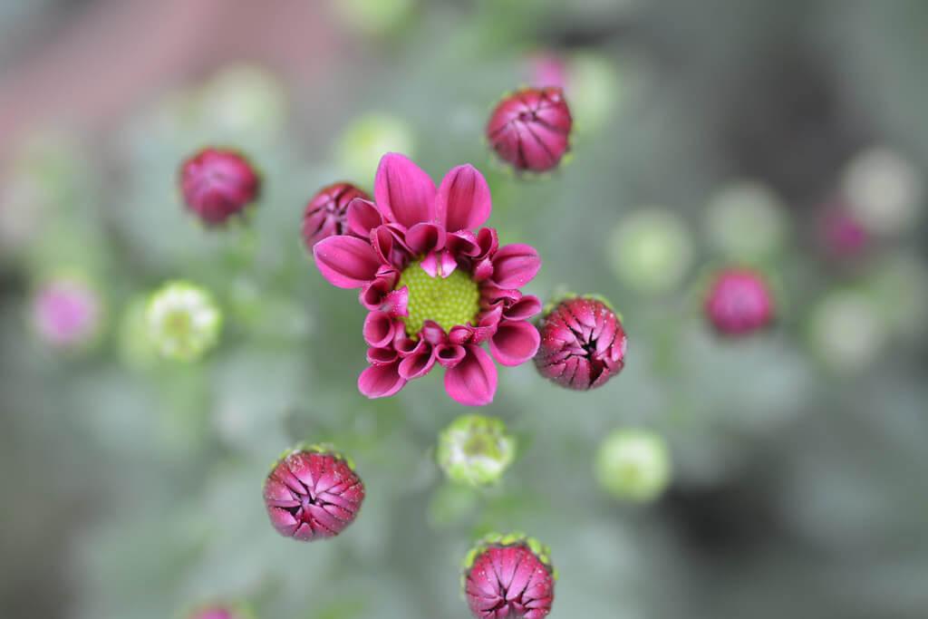 Ngoc Bao Pham - pink blossom