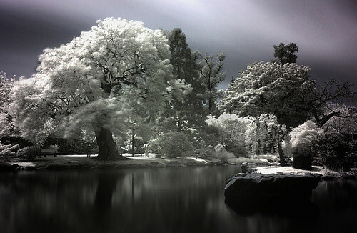 infrared photography 1