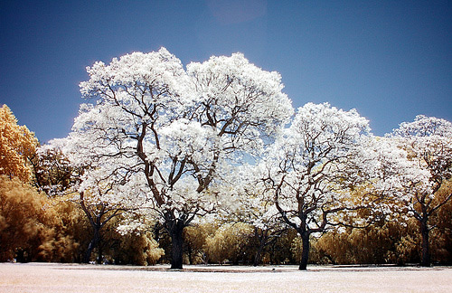 infrared photography 2
