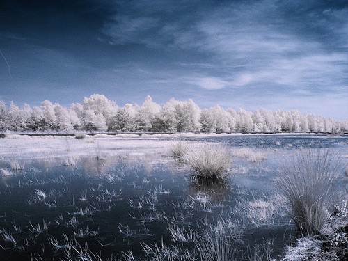 infrared photography 3