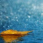 25 Wonderful Photographs of Rain