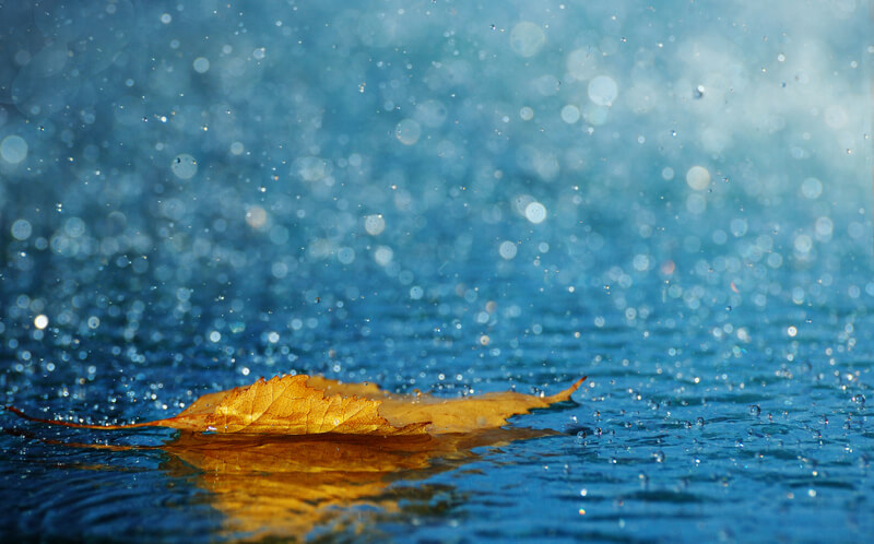 leaf in the rain