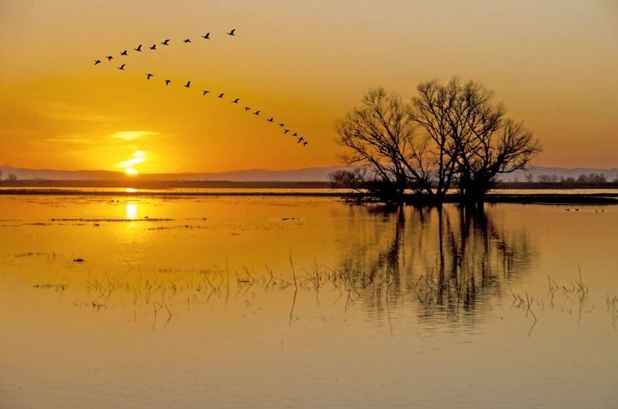 Steve Corey - Sunset Formation