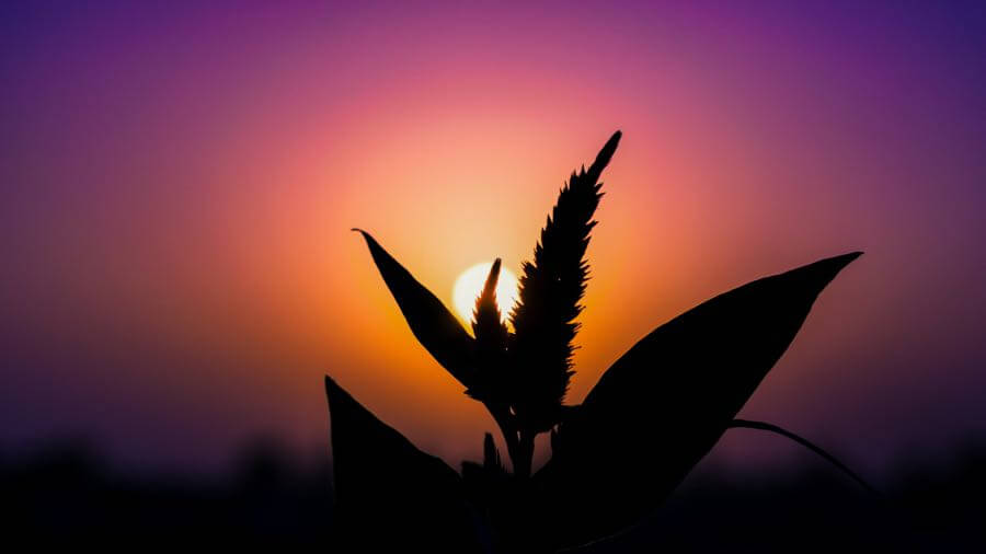 Sunny - Sunset