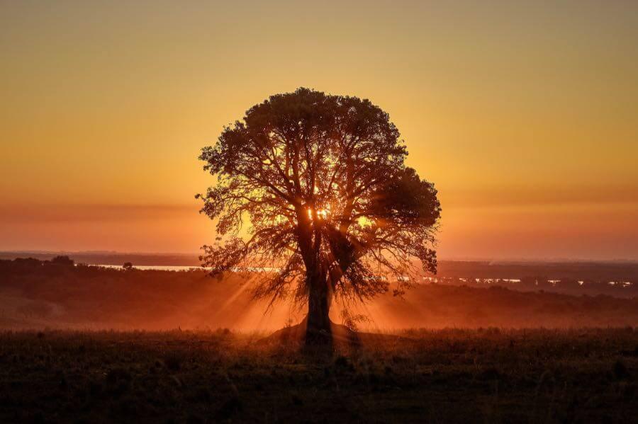 Emilio Küffer - Tree of Life | La Jaula Sunset
