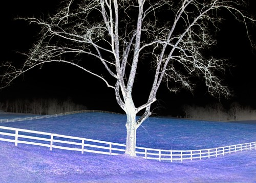 Sycamore--Fence---Color-Inversion