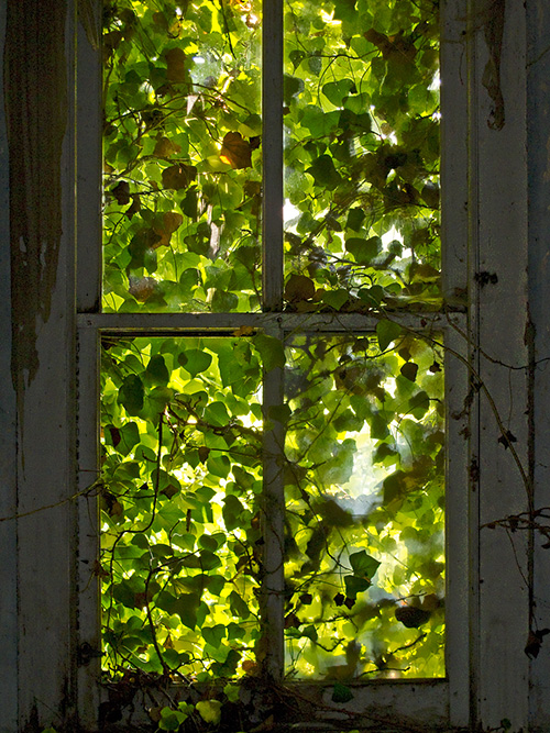 Foliage-Covered-Window