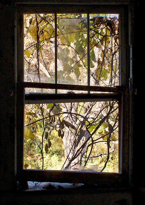 Old-House-Window---4