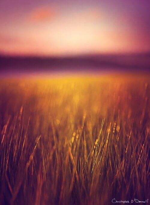 stillness_of_summer1