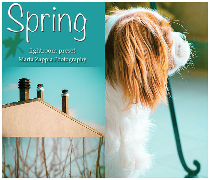 Spring Lightroom Preset