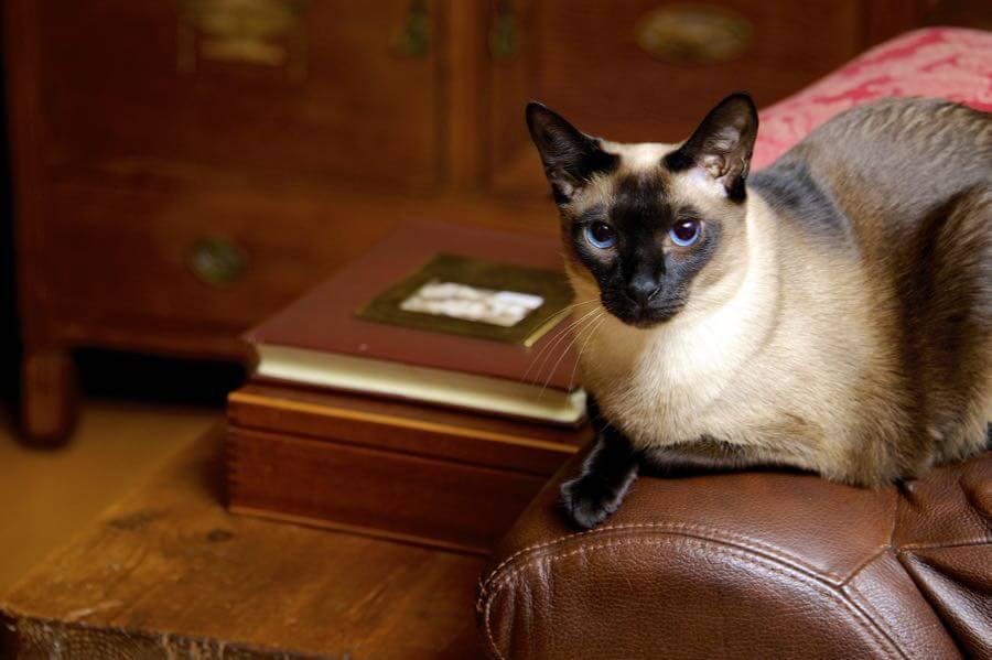 Jamie McCaffrey - One classic cat