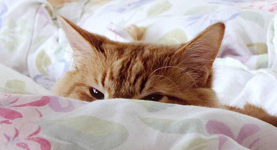 Trish Hamme - cat ? what cat ?