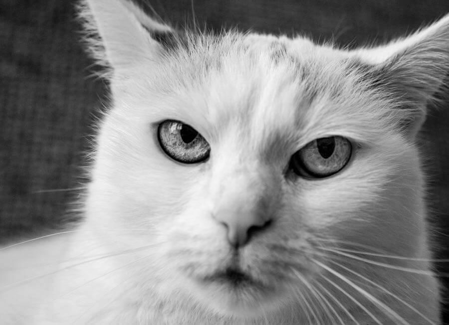 Norbert Eder - Grumpy Cat