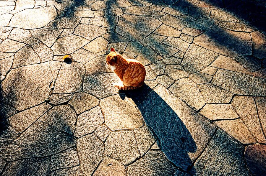 Takayuki Miki (三木貴幸) - cat