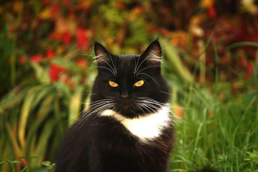 jans canon - Cat Willum