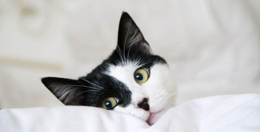 Tomas Aleksiejunas - Black and white cat