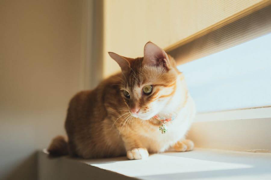 Photos By 夏天 - Window Cat