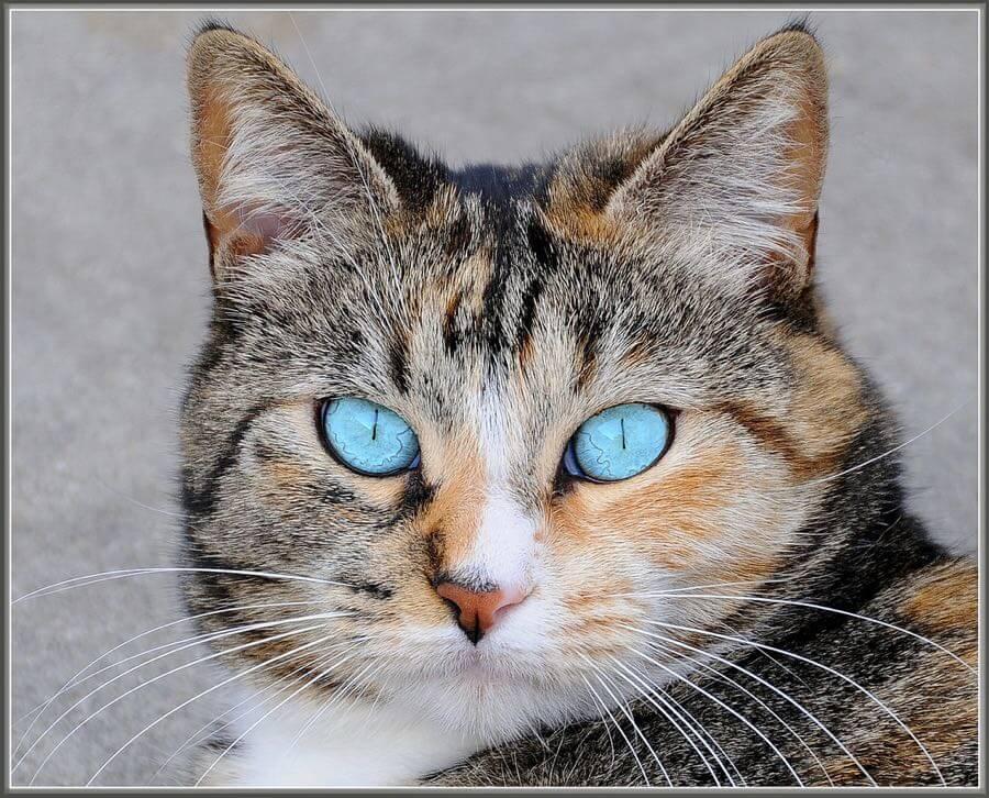 tdlucas5000 - I Iz Cat