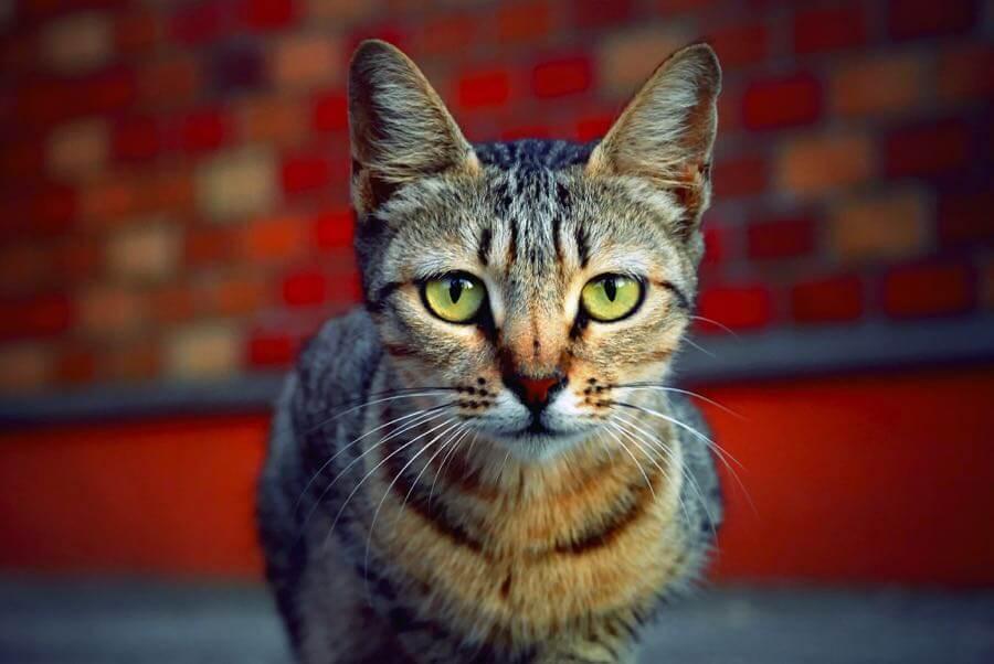 Jimmy B - Cat