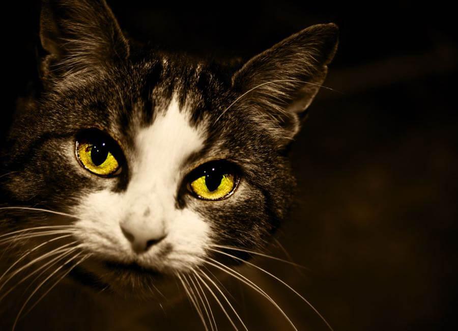 Stuart Richards - Cats Eyes