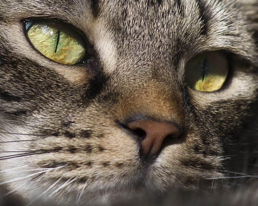 Barbara Willi - cat