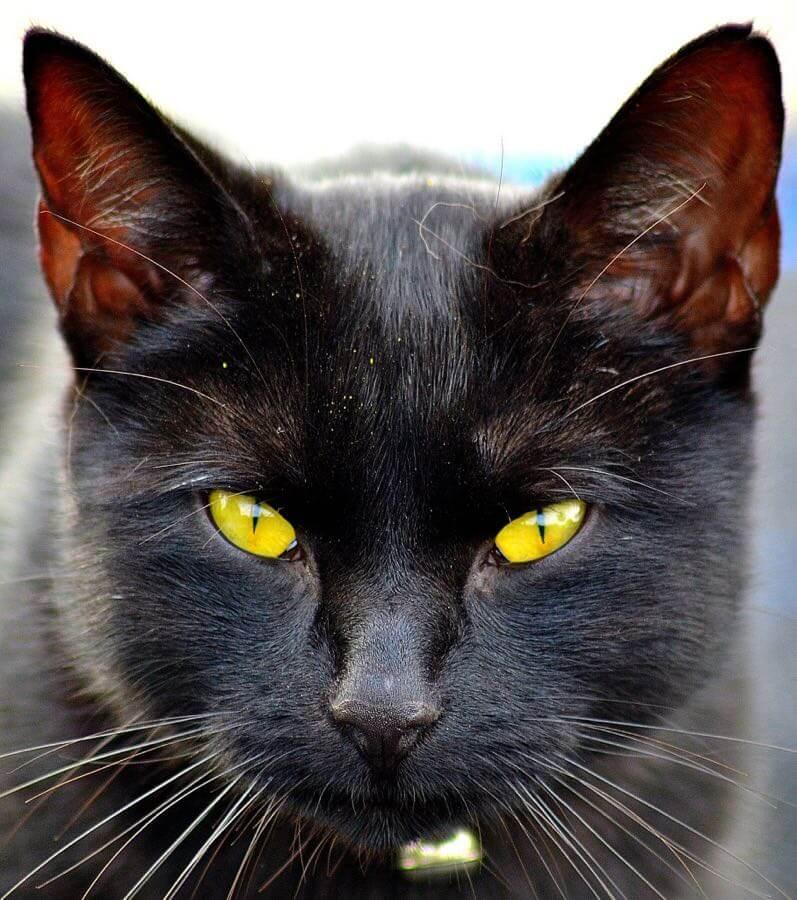 Dennis - Black Cat
