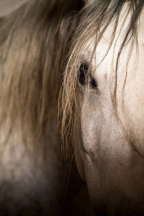 Horse Photography by aminefassi