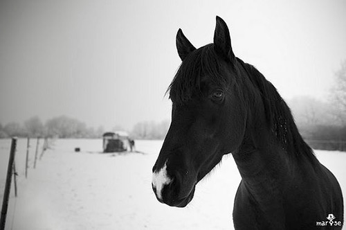 Horse Photography by marYse.PHOTOGRAPHIES
