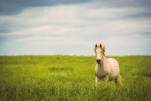 Horse Photography by Troy Marcy Photography