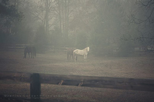 Horse Photography by Denise Worden