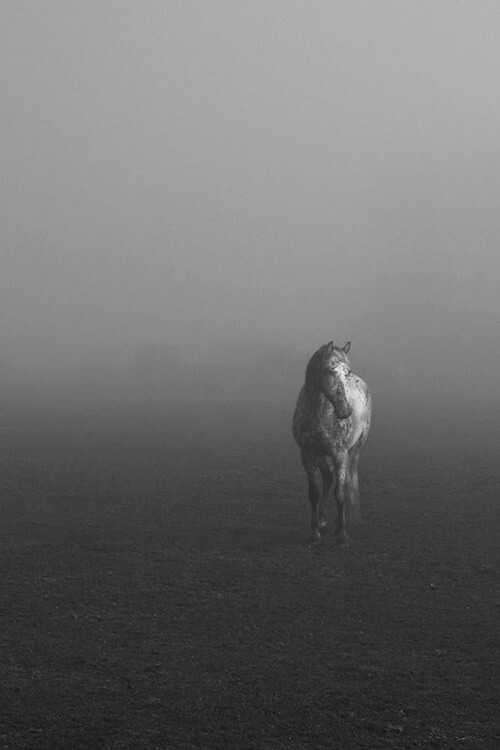 Horse Photography by Danny X