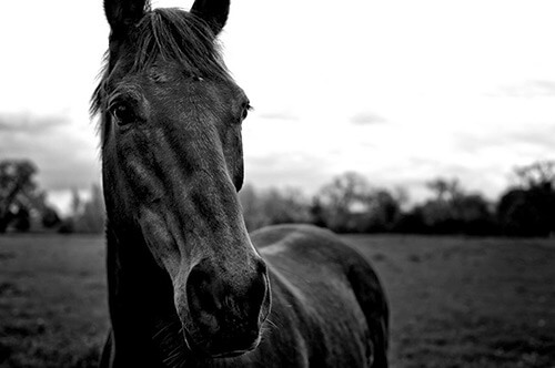 Horse Photography by art star PHOTOGRAPHiC