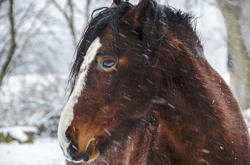 Horse Photography by Ben Roffelsen