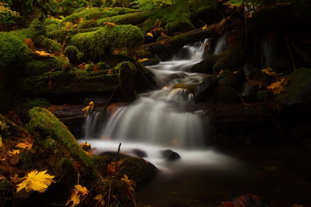 Luke Detwiler - Dry Creek Color