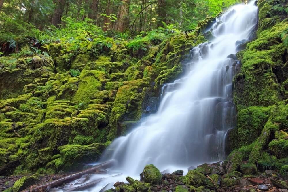 Ian Sane - White Branch Falls