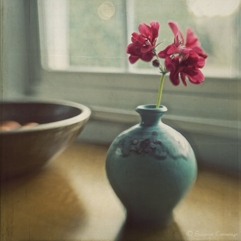 still life photography flowers in vase