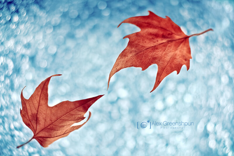 still life photography leaves floating