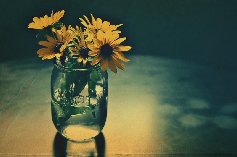 still life photography flowers