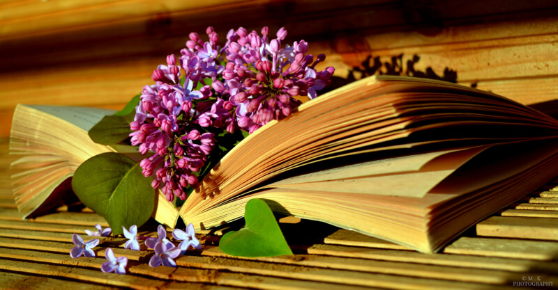 still life photography flowers on book