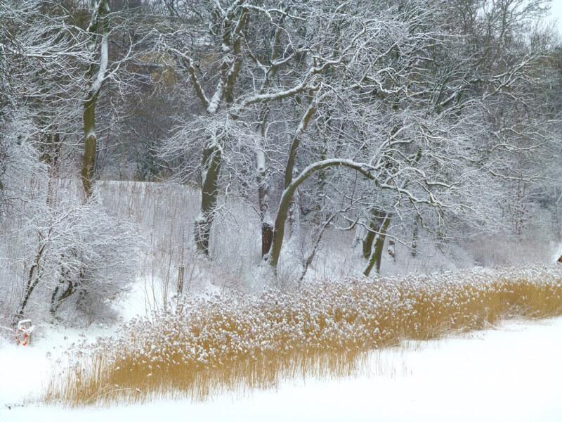 Tanja Hansen - Winter in Copenhagen.....