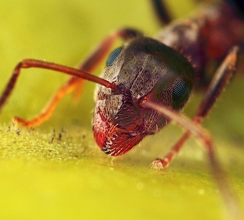 Portrait of ant