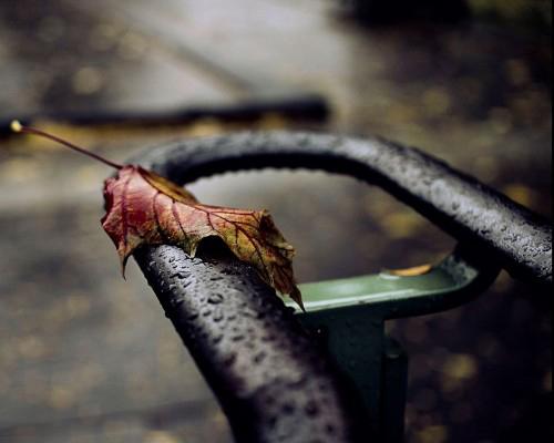 Olga_Tremblay_Photography
