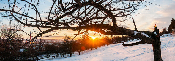 winter-sunlight-photography-featured-image