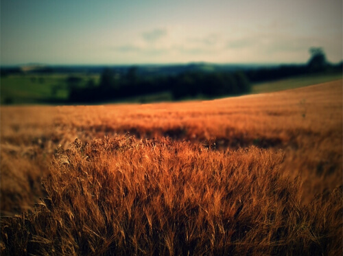 fields-and-meadows-photography