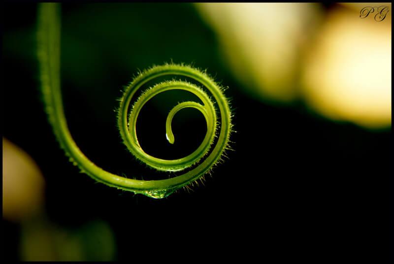 macro plant coil