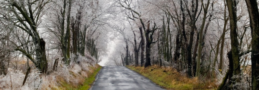 Road-with-Iced-Trees