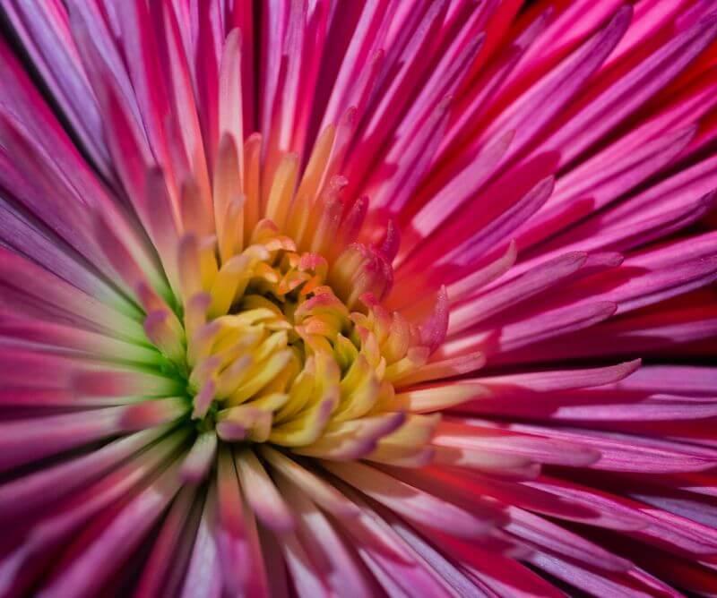 AdaptaLux Flower Explosion.